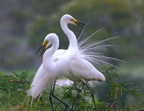 18 migratory birds to spot in mumbai before march ends