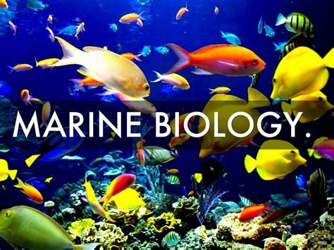 Related Keywords & Suggestions for marine biologist