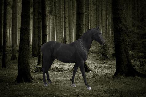 wallpaper hd black horse black horse wallpaper 183