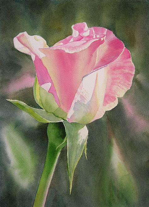princess diana rose princess diana rose bud by sharon freeman