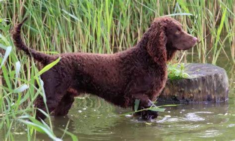 water breeds water breeds list breed
