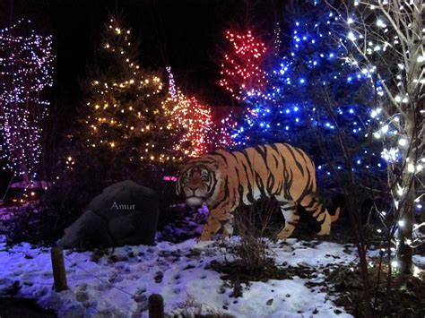 Columbus Zoo Christmas Lights Madinbelgrade Lights Zoo