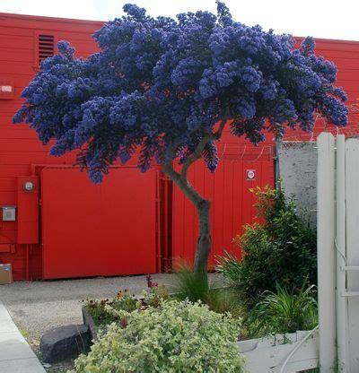 alberi da giardino fioriti 16 alberi ideali per piccoli giardini