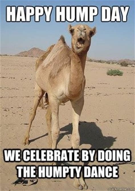 Hump Day Meme Dirty - happy hump day pictures photos and images for facebook