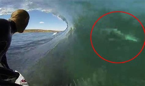 can sharks see color slater posts a wave to a great