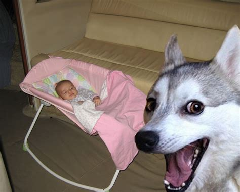 jealous of new puppy jealous photobombs new baby pictures new times