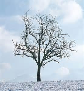 1 5 what is an evergreen smrt