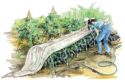 vegetable garden row covers row covers the no spray way to protect plants organic gardening earth news