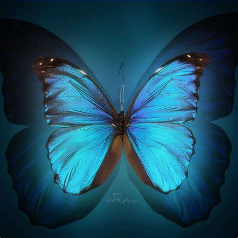 Casing Hp Black Pink Flying Buterfly butterfly backgrounds butterfly wallpaper