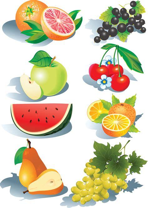 fruit vector fruits vector free vector 4vector
