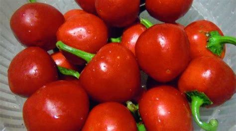 alimentazione con emorroidi emorroidi dieta e alimentazione