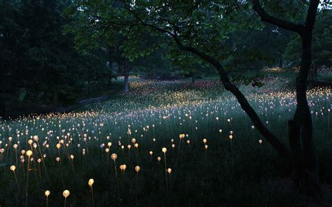 Field Of Light Artist Uses 50 000 Lights To Turn Desert