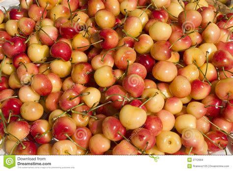 Cherry White white cherry up stock photo image of macro