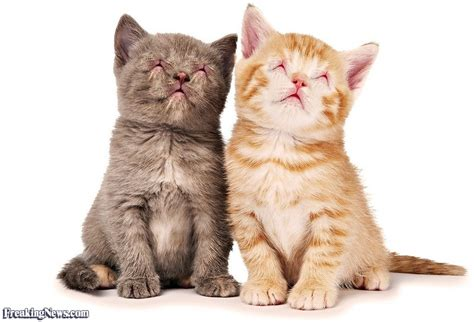 funny kittens pictures freaking news