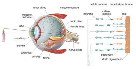 senso di bagnato prima ciclo bulbo oculare ottica cagnacci