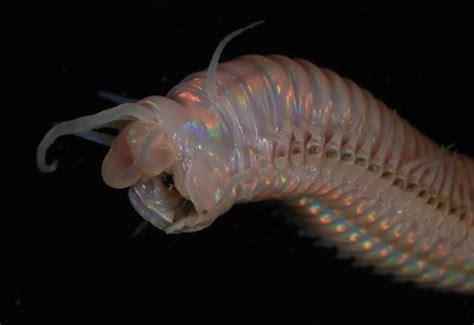 imagenes extrañas del mar fotograf 237 an a las criaturas m 225 s extra 241 as del mar de nueva