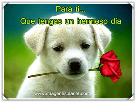 imagenes bonitas de animales buenos dias con imagenes bonitas de perrito con rosas