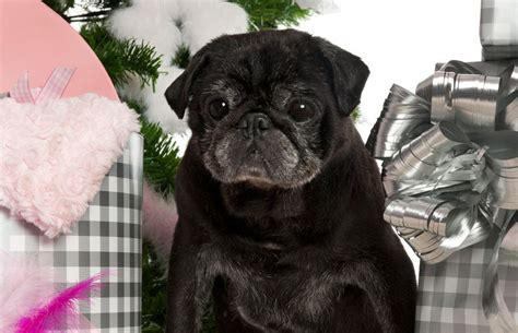 presents for pug presents for pugs pug partners of nebraska