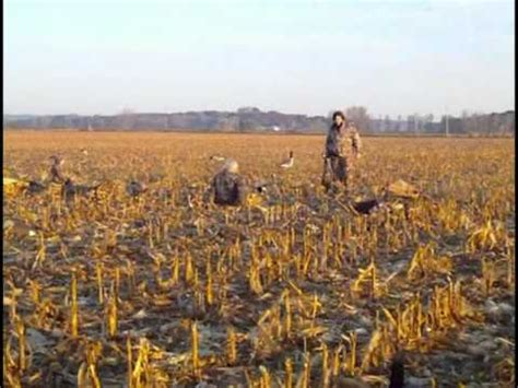 homemade goose hunting layout blinds goose hunting with homemade layout blinds in a cornfield