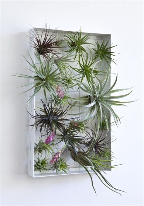 green wall decoration with air plants space saving