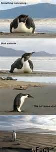 Penguin Memes - 1000 images about penguin memes on pinterest penguin