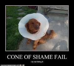 Cone Of Shame Meme - cone of shame cone of shame pinterest