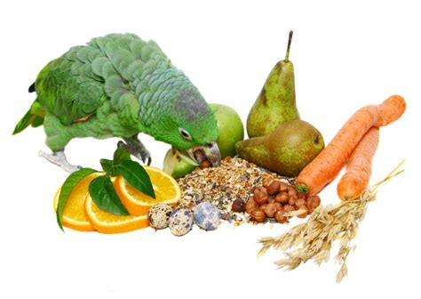 parrot diet feeds seeds and health needs parrot
