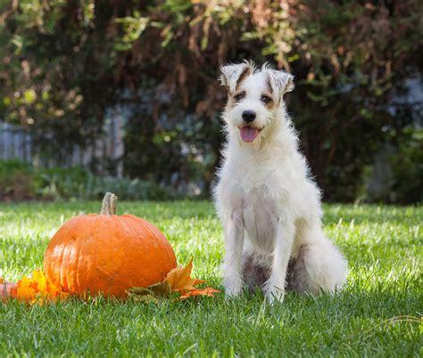 meet happy  dog happy hallmark channel