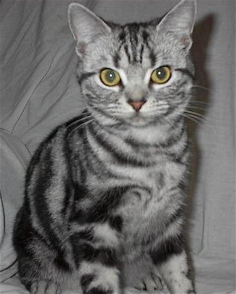Meow Mix Kitten 510g Makanan Kucing Cat Food american shorthair cat