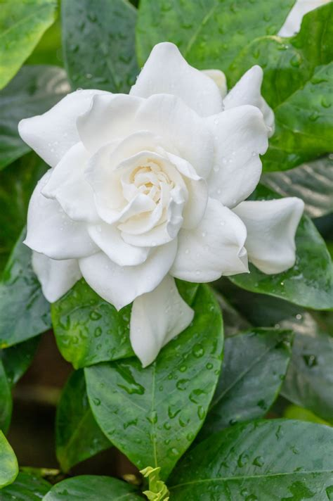 list   flowers  bloom    pin worthy