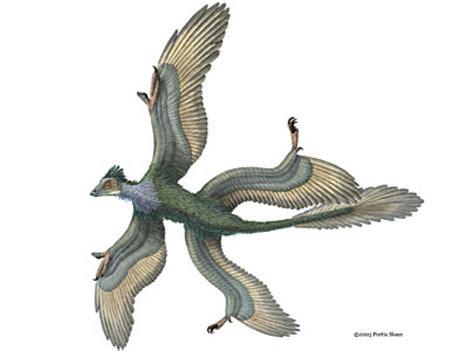 lucertole volanti flying dinosaur may resembled biplane toronto