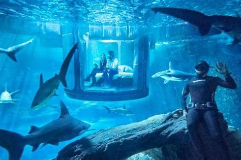 Sports Themed Bedroom Ideas company offers adventurers the chance to sleep underwater