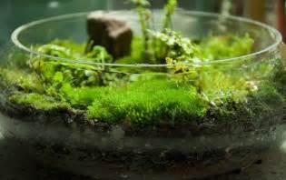 diy terrarium moss graffiti 28 moss and succulent terrarium garden