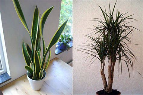 top house plants top house plants 28 images zimmerpflanzen bl 252 hend