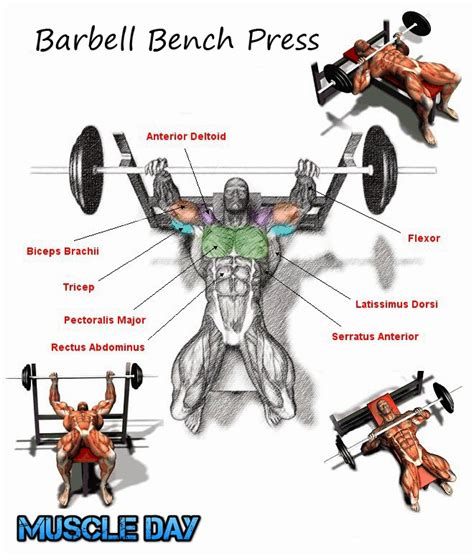 bench press workouts chest exercises barbell bench press muscle day