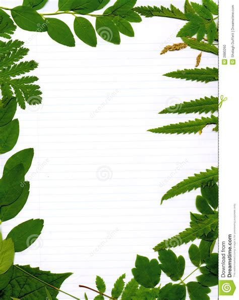lined paper with plant border green leafy natural border stock illustration