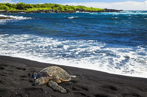 black sand 20 best black sand beaches in the world volcanic sand