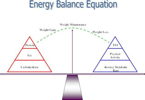 weight management meaning the key to weight management the energy balance equation