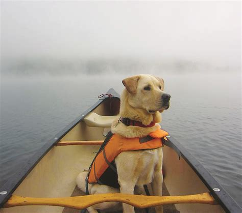 puppy adventure announcing the winners of the 2014 adventure photo contest vermont sports magazine