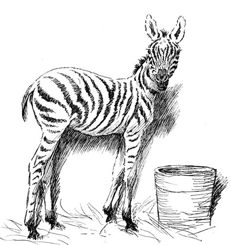 free coloring pages of zebra stripe