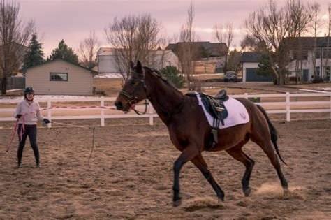 Horse Tack Giveaway 2017 - day 2 the last time you rode a horse and what you did budget equestrian