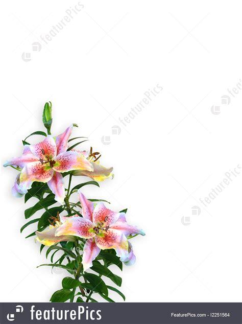 templates lily floral invitation corner design stock