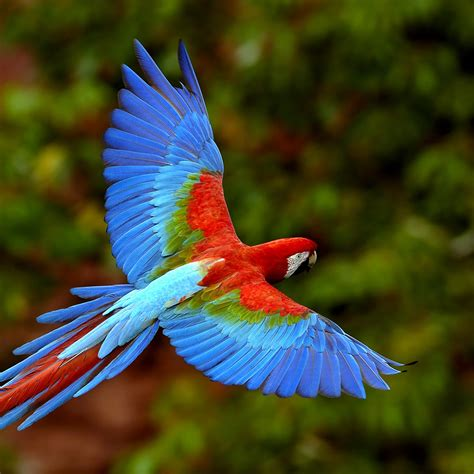 wallpapers of colorful animals colorful parrot ipad wallpaper download free ipad