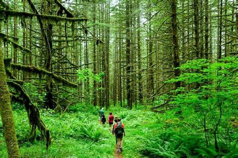 visit incredible rain forests  india   epic adventure