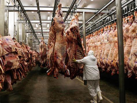 test tube meat   pig  eat   innovators
