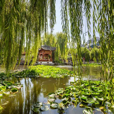 Ordinary Small Wedding Ceremony Venues #5: Chinese-Gardens-Of-Friendship-Wedding.jpg