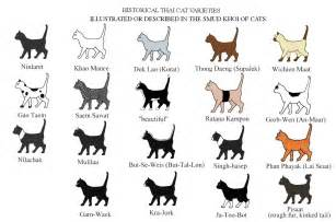 types of cat coloring breeds originating from south east asia