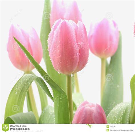 imagenes de flores extrañas y hermosas flores rosadas hermosas imagen de archivo libre de