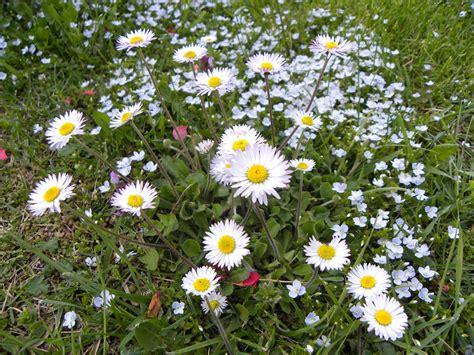 fiori di montagna primaverili perle nel tempo il sapore dei fiori
