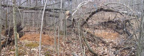 deer bedding areas how to find deer bedding areas 28 images find these 6